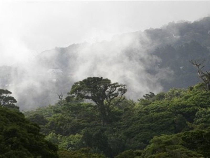Cloud forest in Costa Rica